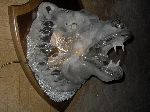 Bust Glass - Grand verre applique - La tête d-un grondement ours - .