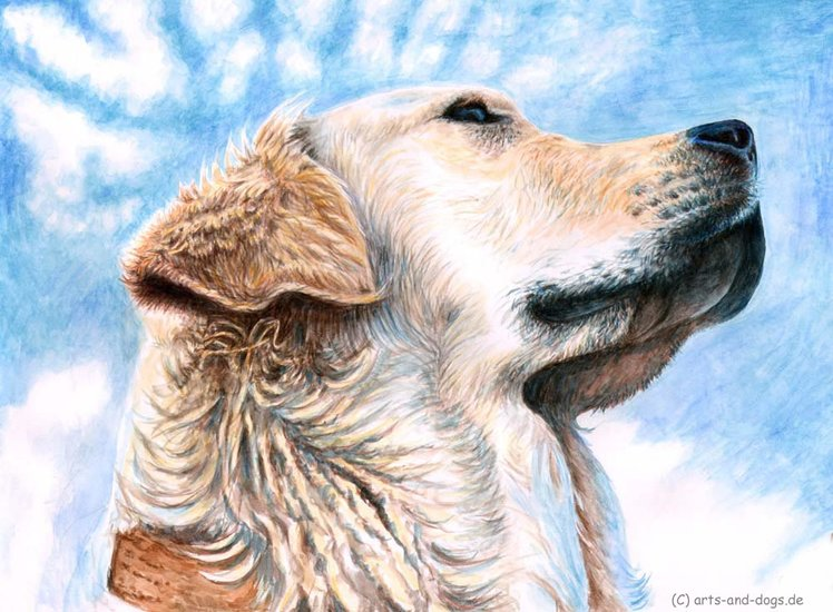 Oeuvre >> Arts And Dogs >> golden retrieverg
