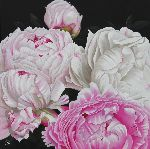 Chantal Rousselet - Pivoines