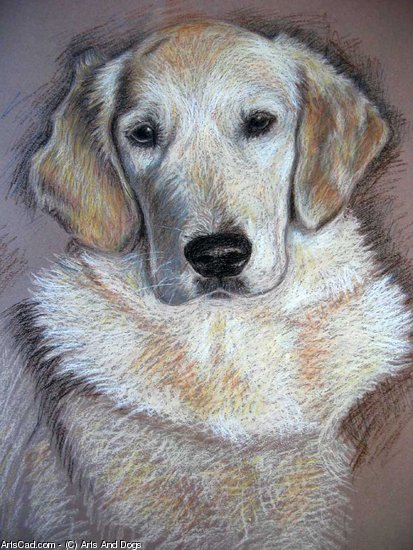 Oeuvre >> Arts And Dogs >> golden retrieverg Pastel à l'huile